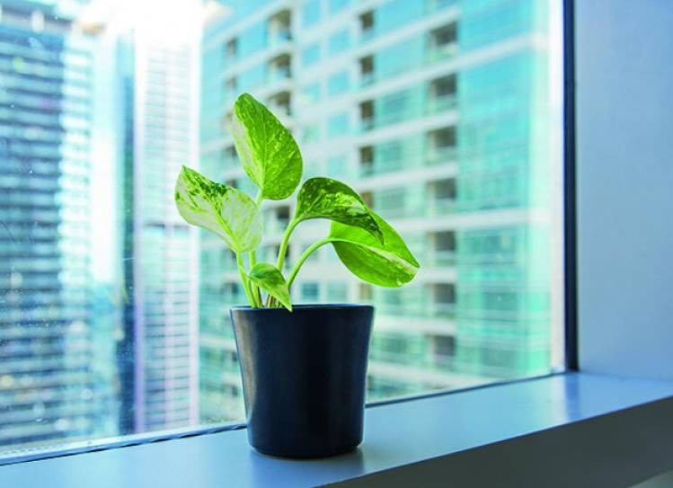 Ways to Improve Indoor Air Quality